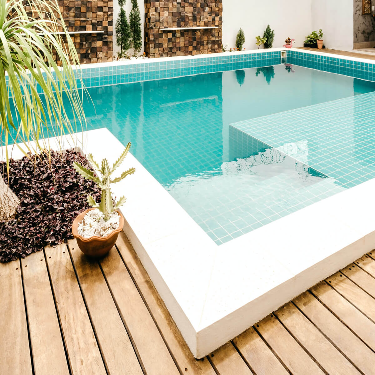 swimming pool and cactus on deck